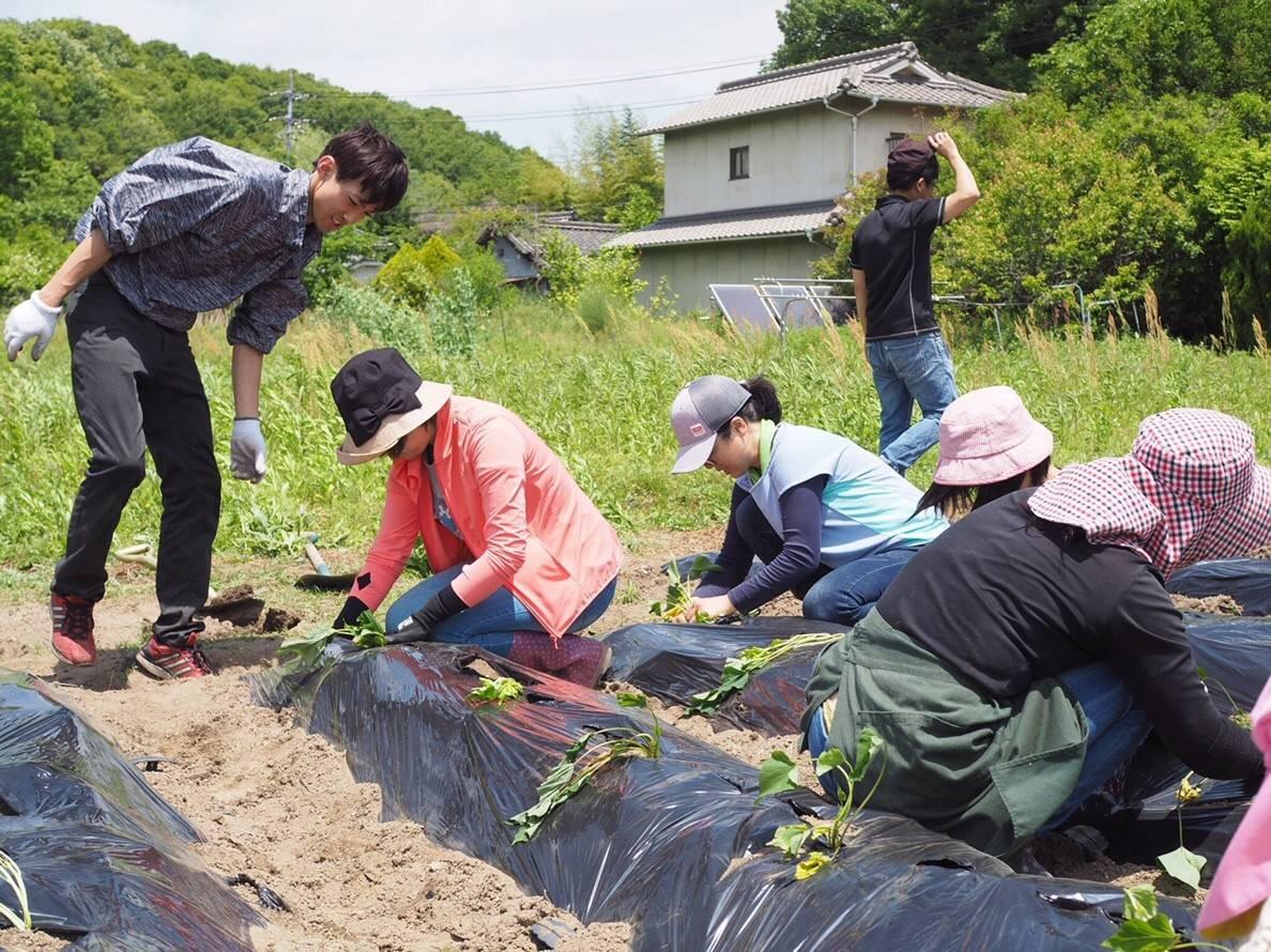 自然体験プロジェクトでサツマイモの植え付けおこないました!
